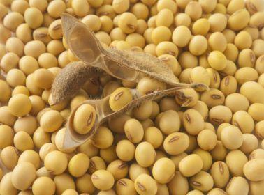 Sumber Makanan Tinggi Protein